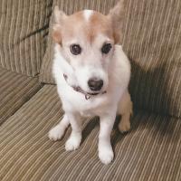 ナチュラルチョイス 小型犬 エイジングケア チキン&玄米 (ナチュラルフード)