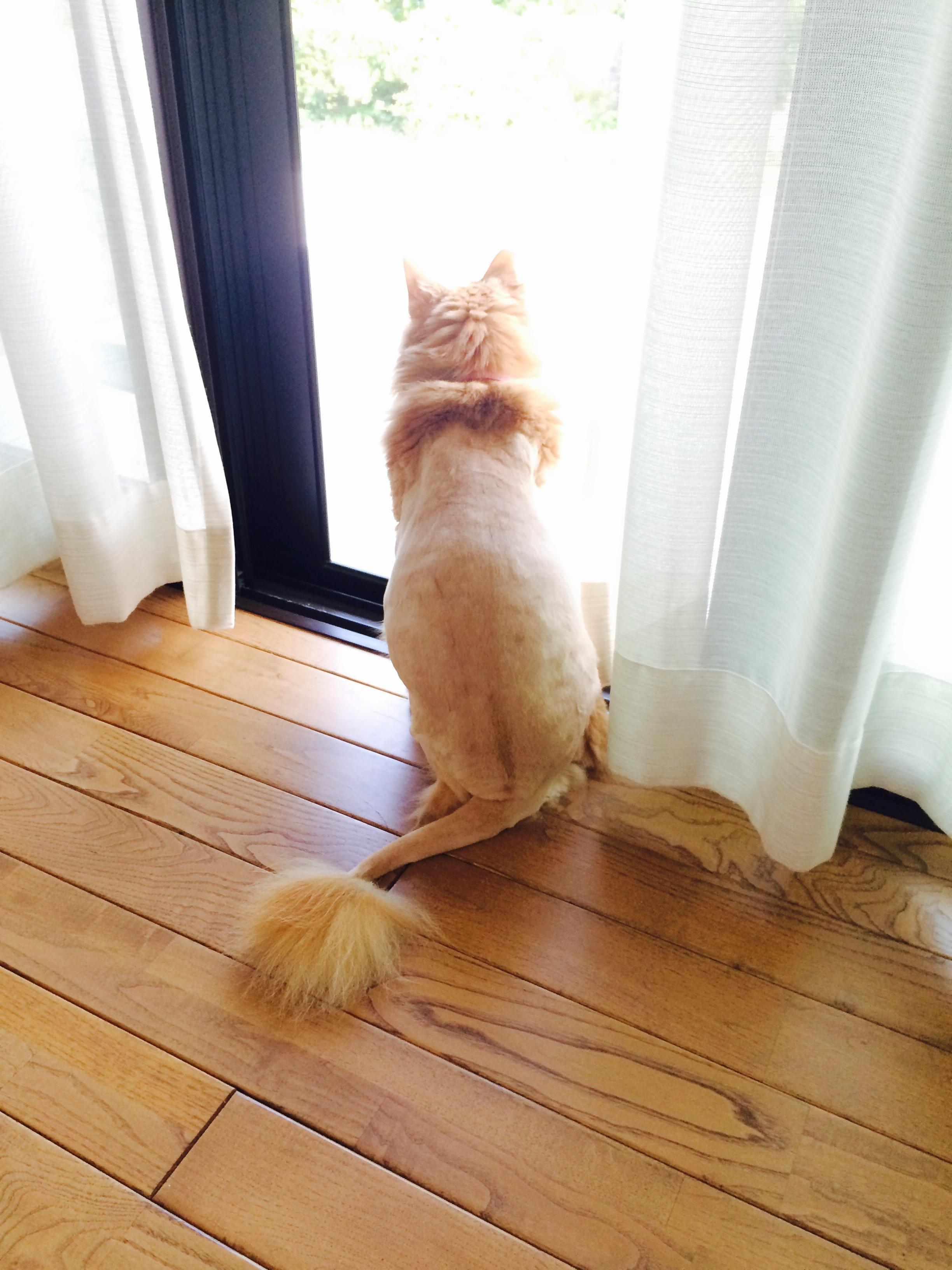 ペットクラブ犬用バリカン ウォッシャブル (犬猫用バリカン)