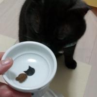 猫用グリニーズ (正規品)(猫用おやつ)