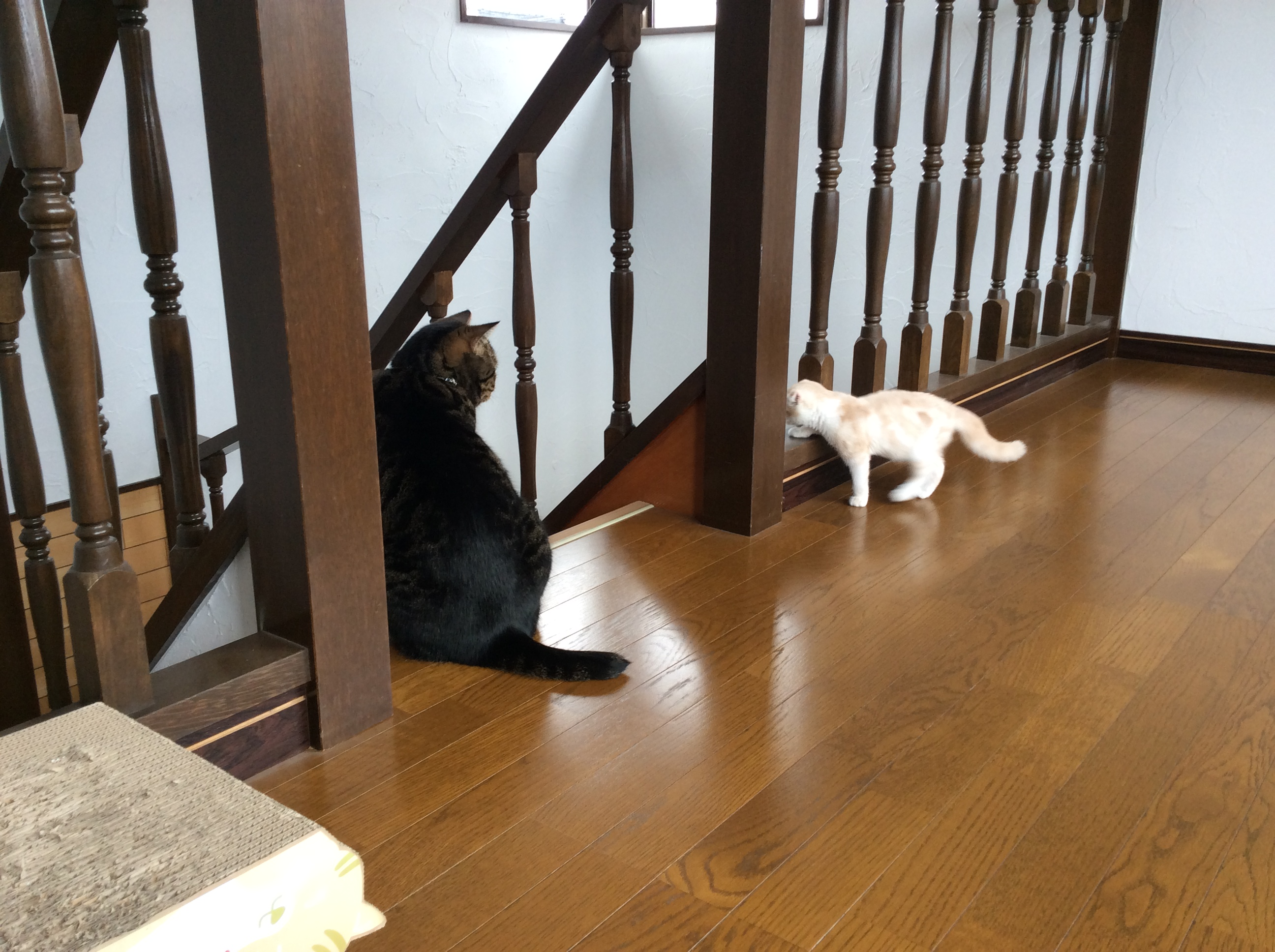 ナチュラルチョイスキャット 室内猫用 キトンチキン (ナチュラルフード)