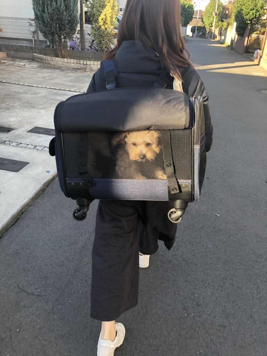 ブロッサムリュックキャリー (犬猫用カートキャリーバッグ)