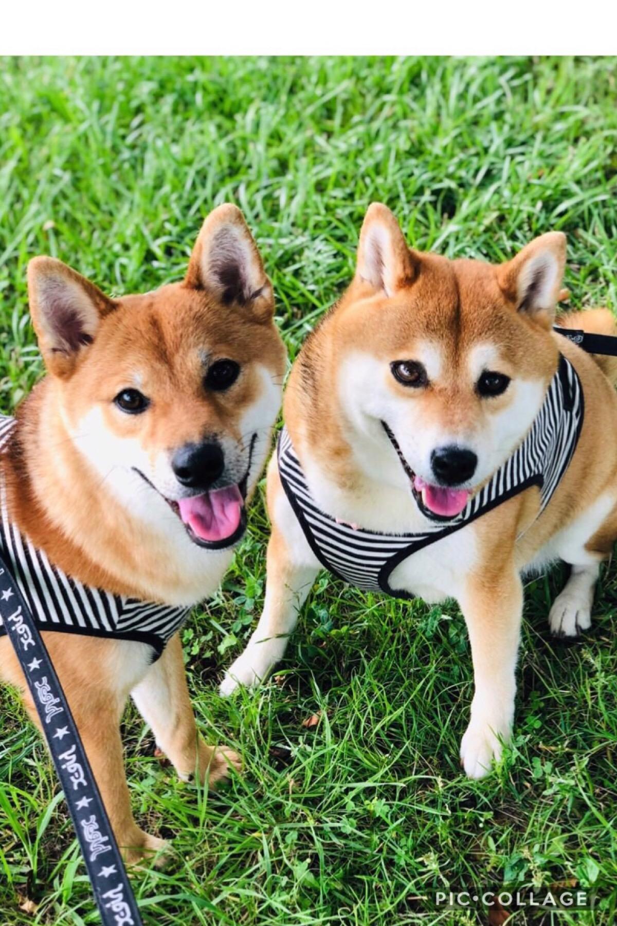 ニュートロ シュプレモ 成犬用 草原のレシピ