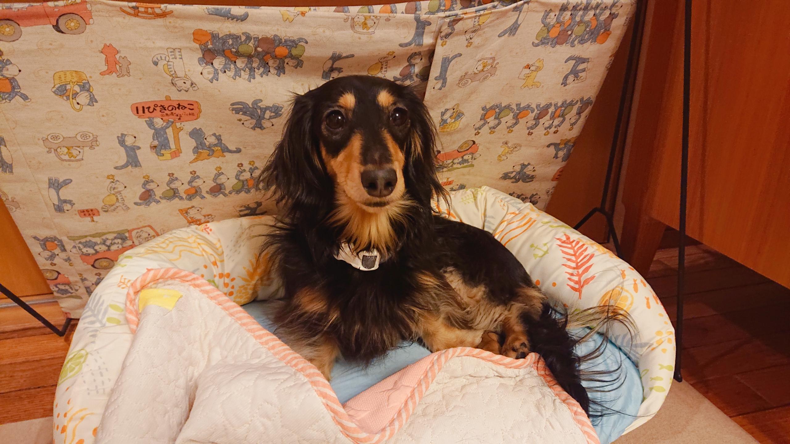 ブルーライフプロテクションフォーミュラ 成犬用 超・小型犬用 フィッシュ&玄米