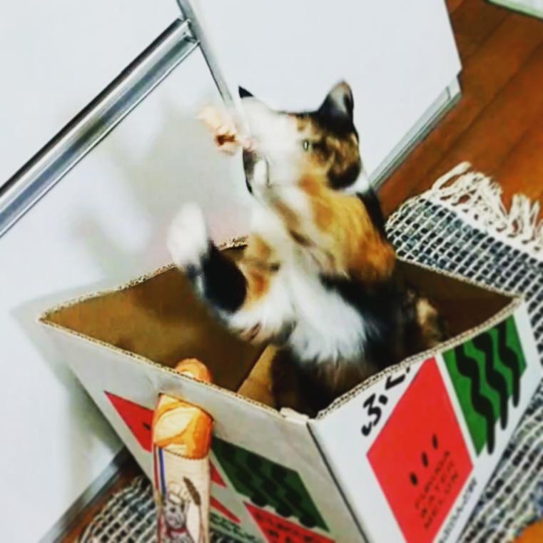 革いー!猫じゃらし