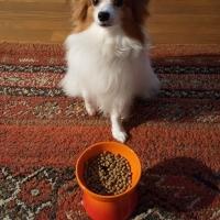 ユーカヌバ スモールフィットボディ 体重管理用 小型犬用