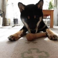 ペットステージ ウッディータフ (天然木チップ製の犬用おもちゃ)