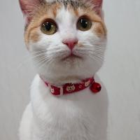 ナイト蓄光猫首輪