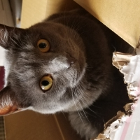 猫用グリニーズ 毛玉ケアスナック