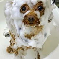 自然流 (犬猫用トリートメントシャンプー コンディショナー)