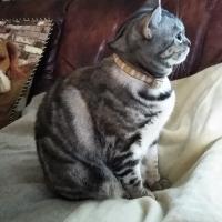 Sippole やさしい猫首輪