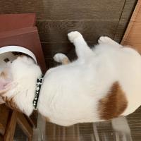 猫用グリニーズ 皮膚被毛ケアスナック