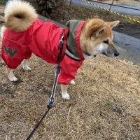 JコートBレインコート (超撥水犬用レインコート)