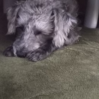 ナノウェルクリーナ(犬・猫ペット用 消臭・除菌 スプレー)