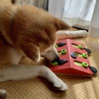 ニーナ・オットソン トリーツトイ(犬用知育玩具)
