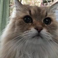 リフレサンド ひのき(木粉系猫砂)