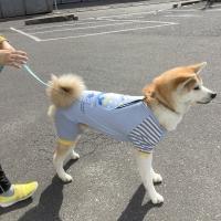 カジュアルプリントロンパース・クール(抜け毛対策)