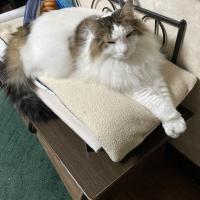 猫専用食器洗剤サラピカ