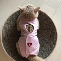 ハート刺繍猫用術後服エリザベスウエア(R)