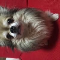 犬種図鑑01