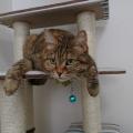 トトロの猫バス風