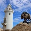 白い灯台と海散歩
