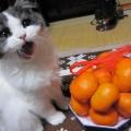 食べきれニャい!