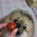 トマト大好き!