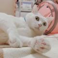 白猫の日!!
