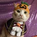 かぼちゃ王子だニャン