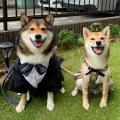 初めての結婚式