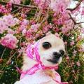 ピンク大好き♥