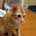 我が家の新入り猫